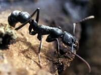 Cercetătorii au descoperit o familie de termite care trăiește și se reproduce fără masculi