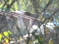 Un bărbat a căzut cu camionul de la 7 metri înălţime şi a murit pe loc