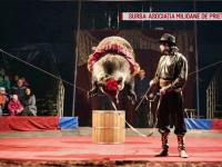 Două ursoaice dintr-un circ, pentru prima dată în pădure. În ce condiții erau ținute