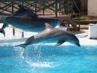 TripAdvisor nu mai vinde bilete pentru atracțiile cu balene și delfini