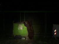 O ursoaică și 2 pui au creat panică într-o localitate din Mureș. Oamenii, avertizați prin RO-Alert