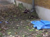Anchetă la Botoșani, după ce un tânăr de 33 ani a fost găsit mort lângă spital