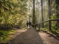 Ce au descoperit doi norvegieni plecați în pădure să caute ciuperci