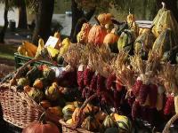 Recoltele toamnei, prilej de sărbătoare în Capitală. Ce festivaluri s-au organizat