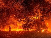 Incendii de vegetație în California. Mii de persoane au fost evacuate. VIDEO