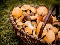 """O femeie din Bârlad a murit după ce a mâncat ciuperci din pădure: """"S-a plâns de dureri"""""""