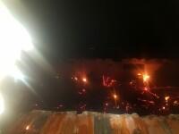 Incendiu la un adăpost din Arad: 60 de animale au murit arse de vii