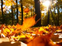 Vremea azi, 27 octombrie. Vine o toamnă frumoasă, dar mai caldă decât ar fi normal