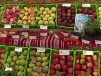 Alertă alimentară. Fructele care vin din Turcia sunt pline de pesticide
