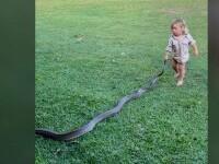 VIDEO Un copil de 2 ani a fost filmat în timp ce trăgea un piton pe iarbă. Tatăl îl încuraja