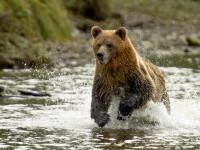 O tânără a fost condamnată la închisoare după ce s-a apropiat de un urs pentru a-l fotografia