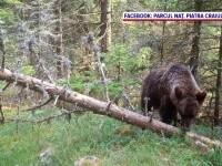 Animale sălbatice, filmate în Parcul Național Piatra Craiului, de o cameră cu senzor