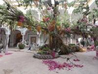 Orașul în care grădinile sunt înflorite tot anul. Festivalul internațional al florilor Cordoba