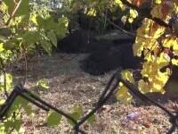 O crimă petrecută acum 15 ani în Neamț a ieșit la iveală. Cadavrul unei fete, găsit îngropat în curtea casei tatălui ei
