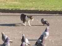Porumbeii au început să se îmbolnăvească și pot reprezenta un pericol pentru oameni. Avertismentul autorităților