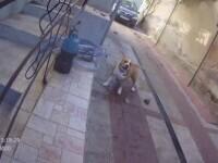 Doi soți din Arad au fost atacați de câinii din curte. S-au baricadat în casă de frică