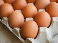 Sute de mii de ouă cu origine falsificată au fost găsite în România