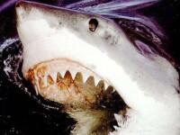 Spectaculos: mii de rechini inoata in apele Floridei. VIDEO