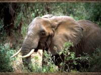 Zi de doliu la o gradina zoologica din Olanda! A murit o femela elefant!