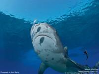 S-a luptat cu un rechin pentru carligul unditei! A scapat printr-o minune