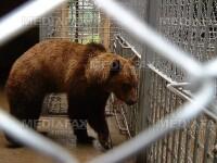 Libertate pentru ursii de la gradina zoologica din Ploiesti!