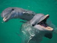Spectacol cu delfini in portul Constanta