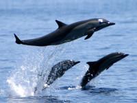 Delfinii Che Chen, Pi Pi si Ni Ni s-au mutat in resedinta de iarna