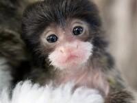 A mers la tribunal cu maimuta in decolteu. N-a vrut sa o lase singura acasa
