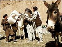 I-ha! Un magar a fost prins cu tigari de contrabanda, la granita