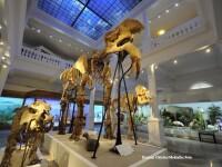 130 de muzee si-au deschis portile gratuit in toata tara. Vizitatorii au de infruntat cozi serioase