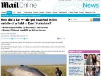 Cum a ajuns acest monstru maritim de 10 metri in mijlocul unui camp din Marea Britanie? FOTO