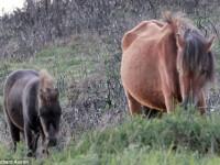 Gestul emotionant al unui ponei, care si-a presimtit sfarsitul. Cum i-a salvat viata puiului sau