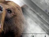 Ursul din Dambovita LOVESTE din nou. Ce explicatie au specialistii pentru comportamentul agresiv