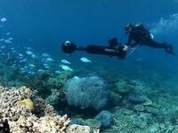 Google ofera primele imagini panoramice ale lumii subacvatice. Cum arata Marea Bariera de Corali