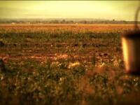 Romania, blestemul pamantului. PARTEA 1. Cum a ajuns o tara care ar putea hrani Europa la mila ploii