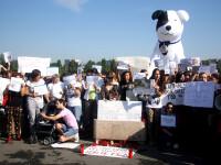 Scandarile de la protestul ONG-urilor impotriva eutanasierii.