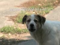 Legea prin care vor fi eutanasiati cainii fara stapan, contestata la CCR de 30 de parlamentari