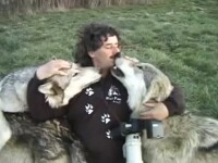 Relatia speciala a unui fotograf cu o haita de lupi. L-au adoptat ca pe unul de-al lor. VIDEO