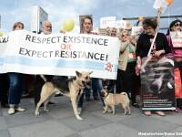 Proteste la sediul CCR, dupa decizia privind constitutionalitatea legii eutanasierii maidanezilor