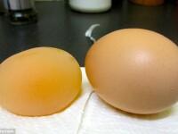 Ce ar fi ouat gaina unui barbat din SUA. Imaginea care a ajuns viral pe internet. FOTO