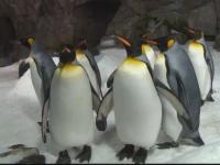 Fosilele unui pinguin gigant, de 1,77 metri, descoperite în Noua Zeelandă