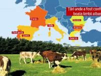 Boala limbii albastre ar putea duce la ieftinirea carnii de vita. Israelul si Iordania au blocat importurile de la noi
