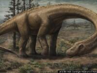Cea mai mare creatura care a calcat vreodata pe Terra. Un nou tip de dinozaur, descoperit in Argentina