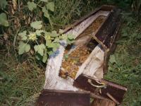 Morminte profanate la Cernica. Un preot din localitate, acuzat ca dezgroapa mortii si ii arunca in spatele cimitirului