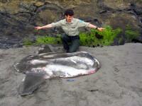 Creatura marina bizara gasita pe o plaja din SUA.