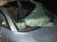 Accident produs din cauza unei carute ce traversa un drum european. Un sofer care circula regulamentar a murit