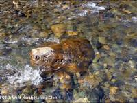 Crocodil gigantic, gasit in apele unui rau din Rusia. Ce cred oamenii de stiinta despre