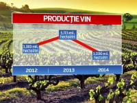 Productia de vin de anul acesta, la jumatate fata de 2013, din cauza ploilor. Planurile pe care si le-au facut viticultorii
