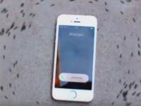 Reactia incredibila a unor furnici in jurul unui iPhone care vibreaza. De ce incep sa mearga in cerc. VIDEO