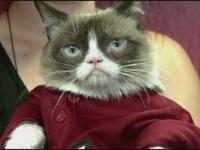 Grumpy Cat, invitata sa dea lovitura de incepere a unui meci de baseball. Ce reactii a starnit
